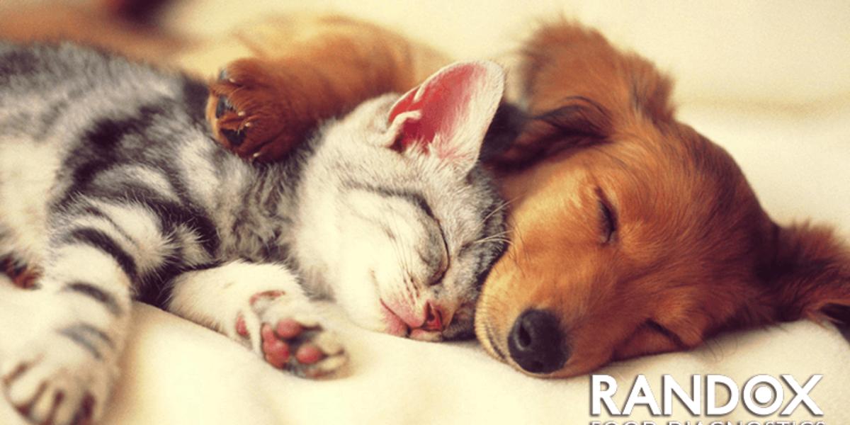 Soluciones para la contaminación por micotoxinas en los alimentos para mascotas.