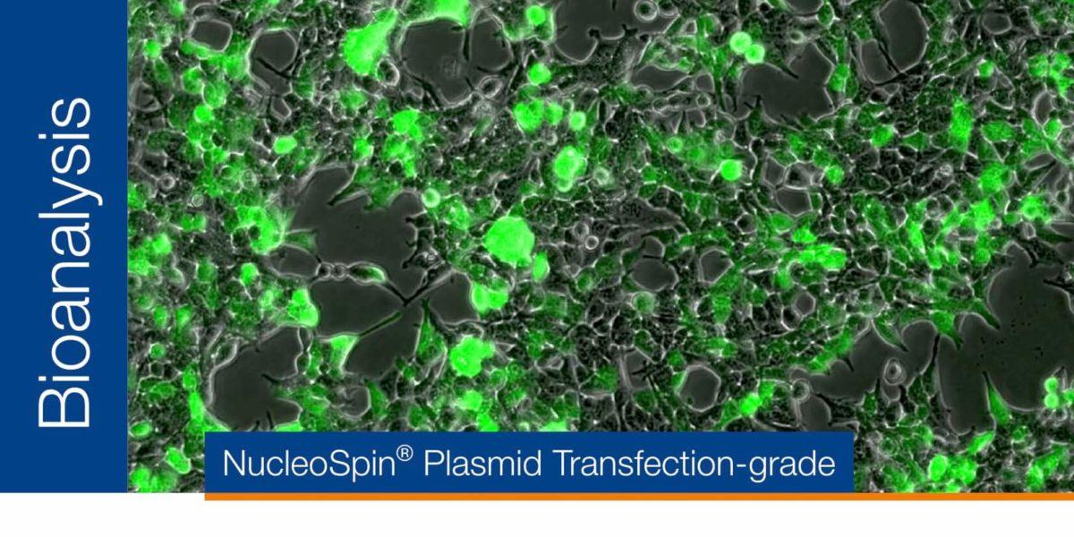 Purificación de plásmidos para transfección – NucleoSpin® Plasmid Transfection-grade