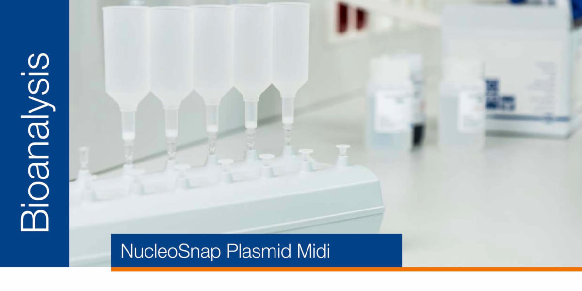 Plasmid purification for transfection – NucleoSnap Plasmid Midi