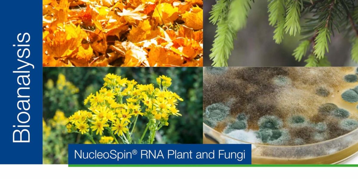 RNA purification from plant and fungi
